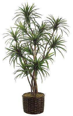Yucca Tree   Tuggl