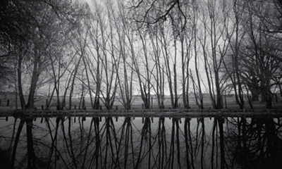 Reflected Trees Canvas